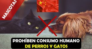 prohiben consumo de perros y gatos en china
